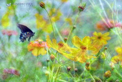 Butterfly and Field of Flowers Vibrant Greens